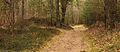 Nationaal Park Drents-Friese Wold. Locatie Dieverzand 04.jpg