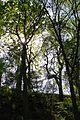 Nationalpark Müritz - am Weg zur Holzbrücke Pagelsee (5).jpg