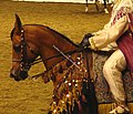 Native Arabian Costume Horse (2669568052).jpg