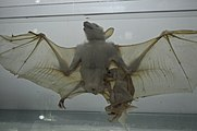 Natural History and Technology Museum of Shiraz University Darafsh (15).JPG