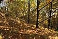 Natural monument Na Strazi in autumn 2011 (1).JPG