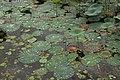 Nature 73.jpg