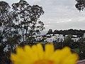 Nature for blinds 17.jpg