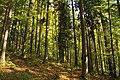 Nature reserve Ptaci stena in autumn 2011 (13).JPG