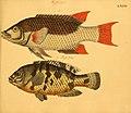 Naturgeschichte in Bildern mit erläuterndem Text (Taf. LXXXV) (6059219488).jpg