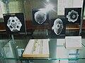 NaturhistoriskaRiksmuseetIntroPalynology.JPG