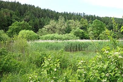 """Naturschutzgebiet """"Unterm Siegel bei Bebra"""" (2).jpg"""