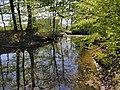 Naturschutzgebiet Beckendorfer Mühlenbachtal Bielefeld.jpg