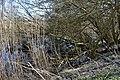 Naturschutzgebiet Haseder Busch - Am Altarm (3).jpg