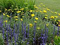 Nemours Mansion and Gardens - Wilmington DE (7654892950).jpg