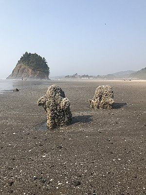 Neskowin Ghost Forest - Image: Neskowin Stumps at Proposal Rock