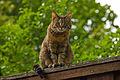 Neugierige Katze in Waidhofen an der Thaya.jpg