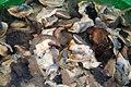 Nigerian Shelled Snails.jpg