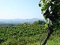 Nimberg-Weinbau-01.jpg
