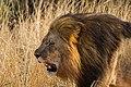 Nkomazi Game Reserve, South Africa (22030042004).jpg
