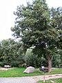 Nonnenau, Hessen, Germany - panoramio.jpg