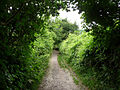 North Downs Way - geograph.org.uk - 1383225.jpg