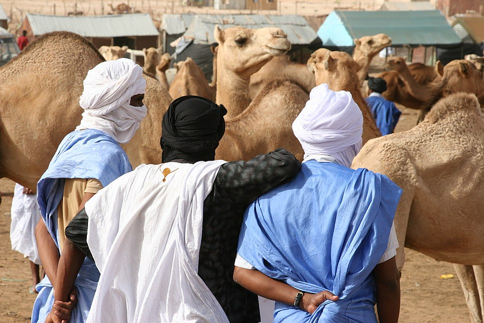 Nouakchott camel market2