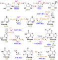 Nucleotides syn1.png