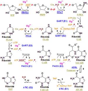 Purine metabolism - Image: Nucleotides syn 1