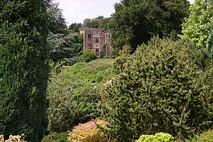 Nymans - Marginally hardy exotics thrive in Nymans' sheltered microclimate
