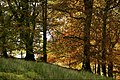 Oak Woodland (30333825053).jpg