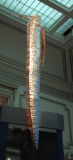 Oarfish smithsonian