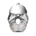 Occipital bone Lateral angle09.png