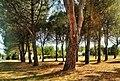 Ombra in pinetina.jpg
