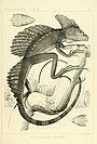 On the batrachia and reptilia of Costa Rica - With notes on the herpetology and ichthyology of Nicaragua and Peru (1875) (14797175033).jpg