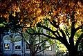Orange Cypress (3628876245).jpg