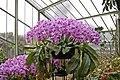 Orchids, Kew Gardens, Surrey - geograph.org.uk - 1177810.jpg