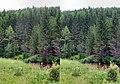 Ordzhonikidzevskiy r-n, Khakasiya Republits, Russia - panoramio - Сергей Корытин (1).jpg