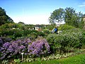Oslo Botanical Garden - IMG 8922.jpg