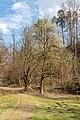 Pörtschach Leonstein Seeburger Weg Buche und Weide 29032020 8620.jpg