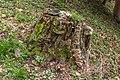 Pörtschach Winklern Quellweg morscher Baumstumpf 22032020 8547.jpg