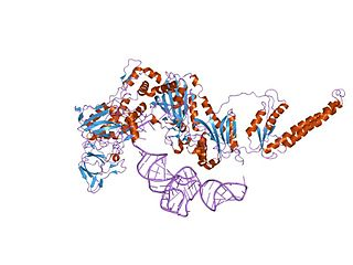 Phenylalanine—tRNA ligase