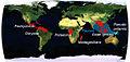 Pachychilidae world.jpg