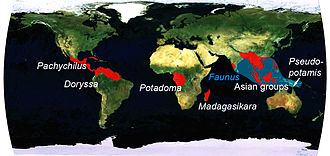 Pachychilidae - The global distribution of the family Pachychilidae
