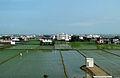 Paddy field, Yilan 01.jpg