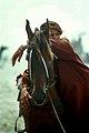 Pakistani horse rider.jpg
