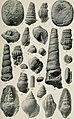 Paleontology of the Coalinga district, Fesno and Kings counties, California (1909) (14764894735).jpg
