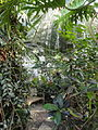 Palm House - Lyman Plant House, Smith College - DSC04238.JPG