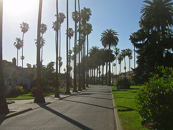 Palm Trees in San Jose California