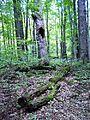 Parc-nature du Bois-de-l-ile-Bizard 12.jpg