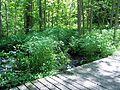 Parc-nature du Bois-de-l-ile-Bizard 15.jpg
