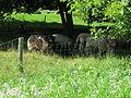 Parc agricole du Bois-de-la-Roche 013.jpg
