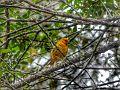 Parque Estadual do Itacolomi - Pássaro.jpg