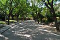 Passeig sota els arbres del parc de Benicalap.JPG