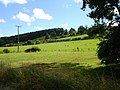 Pasture above Cyfronydd Station - geograph.org.uk - 629988.jpg